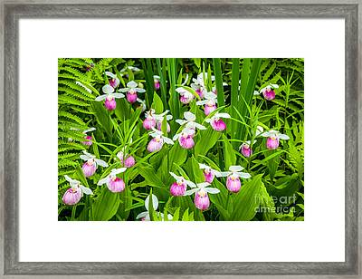 Showy Ladies Framed Print by Susan Cole Kelly