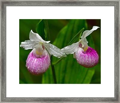Showy Lady Framed Print