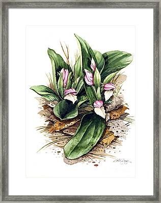 Framed Print featuring the painting Showy Orchis by Bob  George