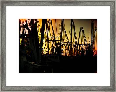 Shrimp Marina Framed Print