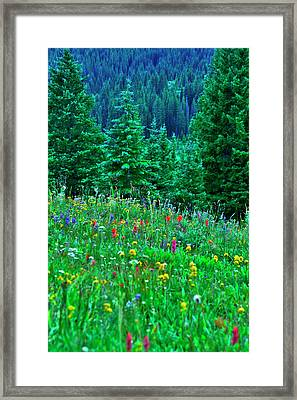 Shrine Pass Wildflowers Framed Print