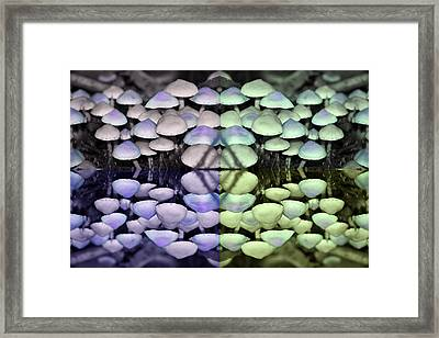 Shroom Slice Framed Print by Jeff Anderson