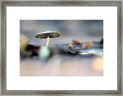 'shroom Framed Print by Tracy Male