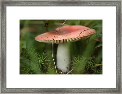 Shroomery Framed Print