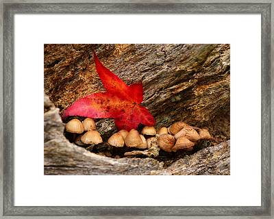 Shrooms Framed Print by Jacqui Collett