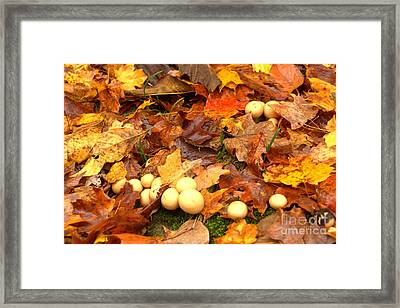 Framed Print featuring the photograph Shrooms by Jim McCain