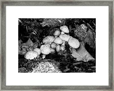 'shrooms' Framed Print