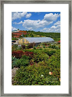 Shrubbery At A Greenhouse Framed Print by Amy Cicconi