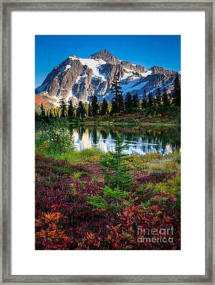 Shuksan Autumn Framed Print