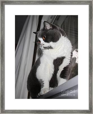 Shuli  Framed Print