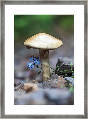 Shy Framed Print