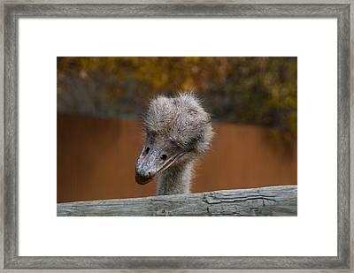 Shy Bird Framed Print by Trish Tritz
