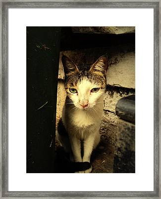 Shy Cat Framed Print