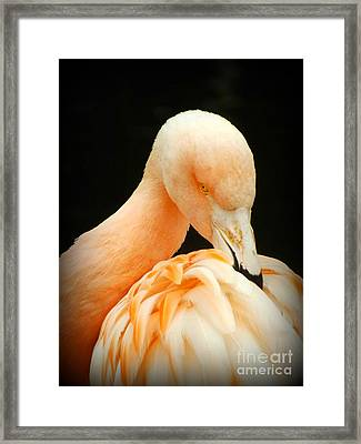 Framed Print featuring the photograph Shy by Clare Bevan