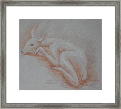 Shy Fawn Framed Print by Deborah Dendler