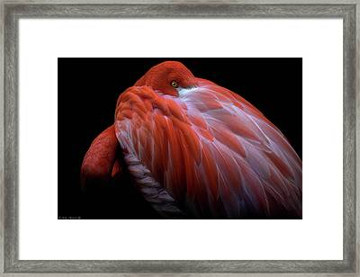 Shy Framed Print by Ilias Nikoloulis