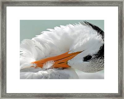 Shy Framed Print by Julie Cameron