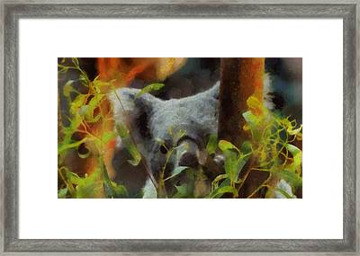 Shy Koala Framed Print by Dan Sproul
