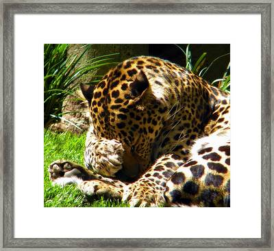 Shy Leopard Framed Print