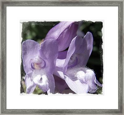 Shy Little Violets Framed Print