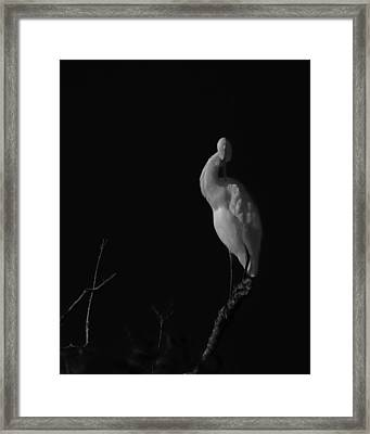 shy Framed Print by Mario Celzner