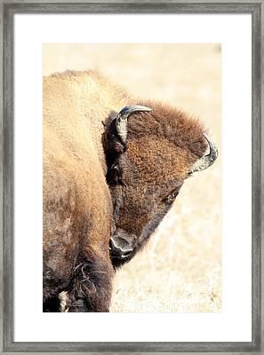 Shy Framed Print by Rick Rauzi