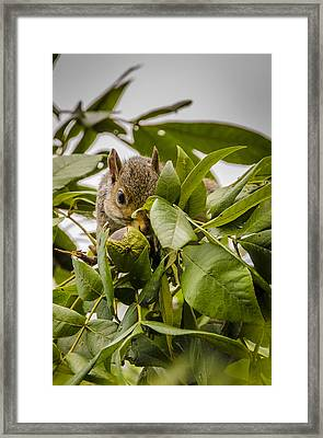 Framed Print featuring the photograph Shy Squirrel by Bradley Clay