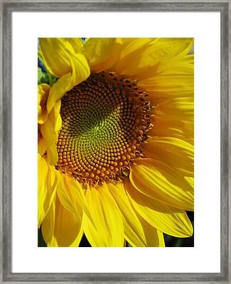 Shy Sunflower Framed Print by Laura Corebello