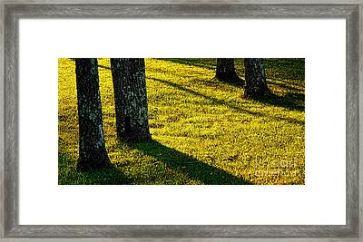 Shyness Framed Print by Olivier Le Queinec
