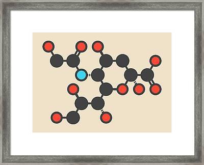 Sialic Acid Molecule Framed Print