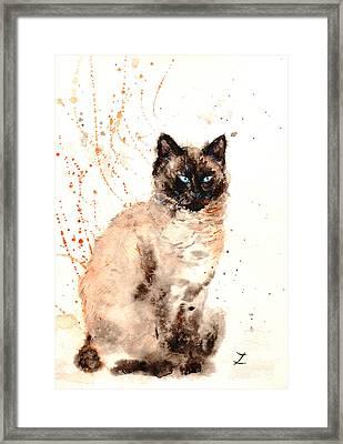 Siamese Beauty Framed Print by Zaira Dzhaubaeva