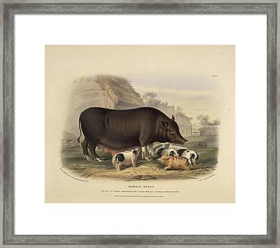 Siamese Breed Framed Print