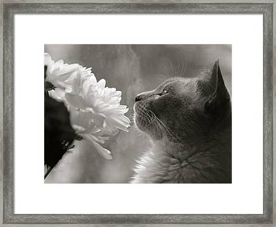 Siamese Cat With Flowers Framed Print