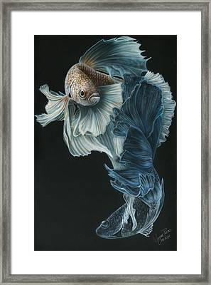 Siamese Fighting Fish Three Framed Print