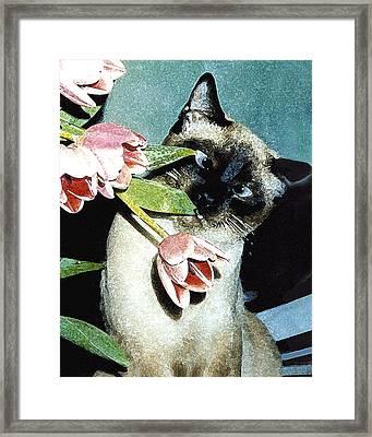 Siamese In Tulips Framed Print by Elia Peters