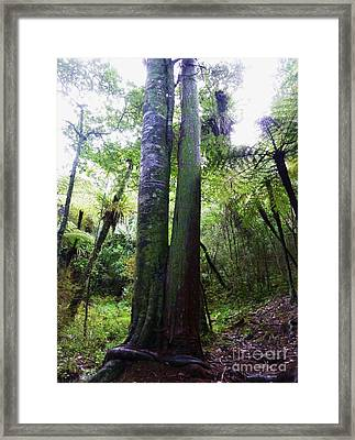 Siamese Twin Trees Framed Print