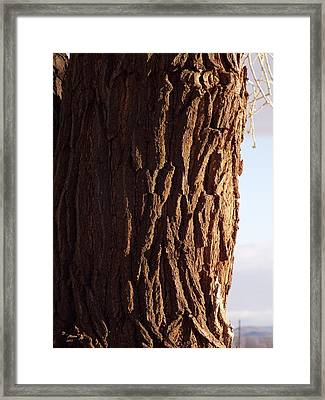 Framed Print featuring the photograph Siberian Elm Tree by Deborah Moen