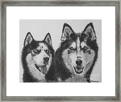Siberian Husky Dogs Sketched In Charcoal Framed Print by Kate Sumners