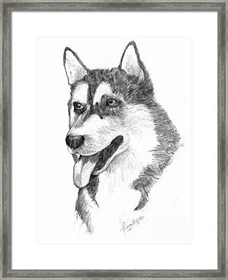 Siberian Husky Framed Print by Tricia Griffith