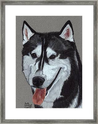 Siberian Husky Vignette Framed Print by Anita Putman