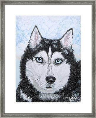 Siberian Husky Framed Print by Yvonne Johnstone