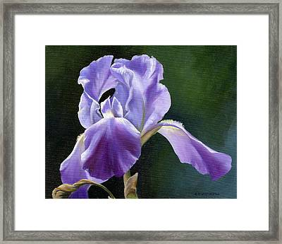 Siberian Iris Framed Print