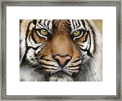 Siberian Tiger Closeup Framed Print