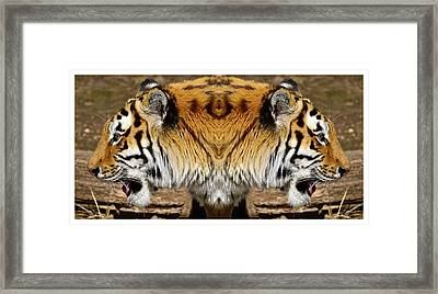 Siberian Tiger Double Portrait  Framed Print