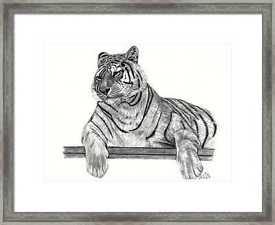 Siberian Tiger Framed Print by Patricia Hiltz