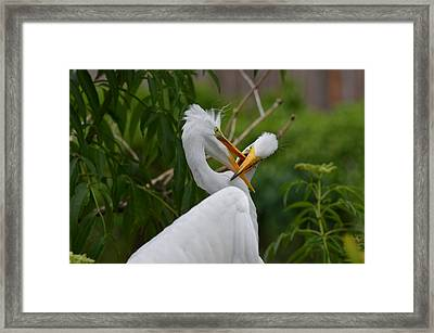 Siblings At Play Framed Print