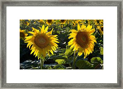 Side By Side 2 Wcae  Framed Print