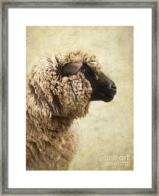 Side Face Of A Sheep Framed Print