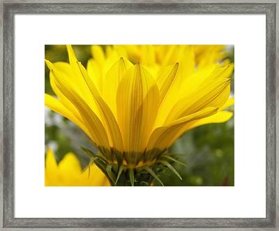 Side Of The Yellow Daisy Framed Print by Corinne Elizabeth Cowherd