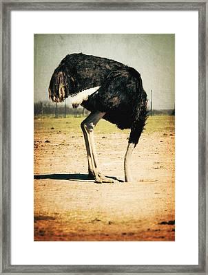 Side View Of An Ostrich On Landscape Framed Print by Robert Morrissey / Eyeem